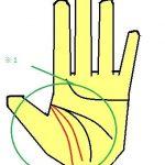 最強のアンチエイジング線(3重生命線の手相)