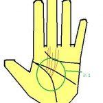 開運線が多い手相は柔軟性が高い。