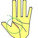 モテ線 手相 生命線の内側から合流する線