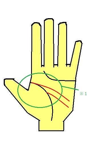 2重頭脳線~生命線の途中からも一つ線が出る~