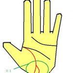 生命線が二股に分かれる手相は変化を好む性質を示す